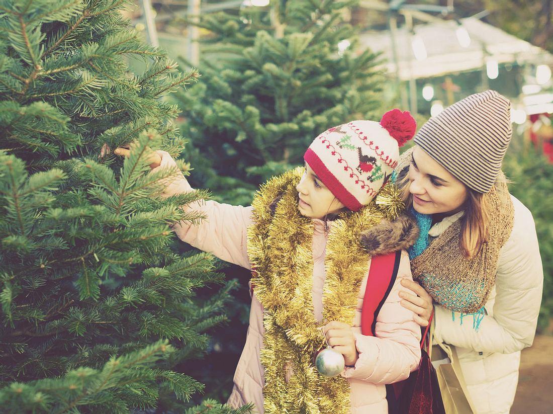 Tipps für den Tannenbaum-Kauf