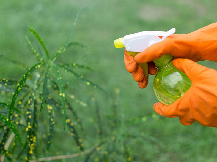 Thripse: Das können Sie gegen den Schädling tun