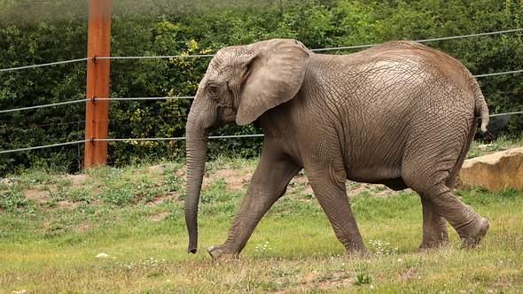 Thüringer Zoopark Erfurt freut sich über erstes Elefantenbaby