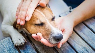 Wenn das geliebte Haustier geht, stehen die Tierbestatter Sibylle und Jürgen Schnell mit Rat und Tat zur Seite.  - Foto: damedeeso / iStock