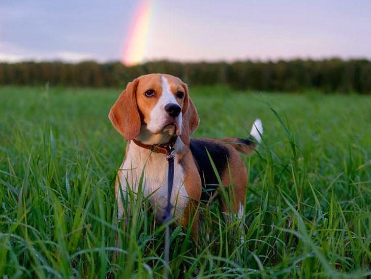 Tierbestattung: Was sie wissen sollten, wenn das geliebte Tier über die Regenbogenbrücke geht