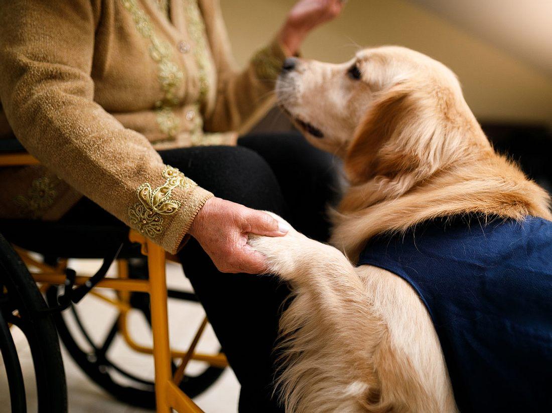 Tiergestützte Therapie mit Besuchshund.
