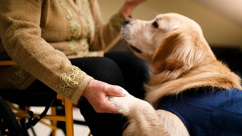 Tiergestützte Therapie mit Besuchshund. - Foto: Capuski / iStock