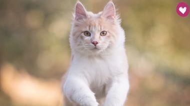 Katze springt auf einer Wiese - Foto: iStock