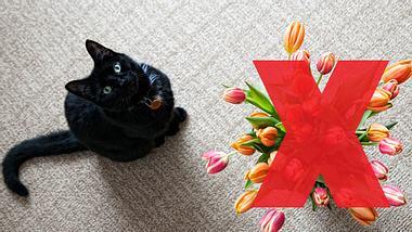 10 giftige Frühlingsblumen für Haustiere