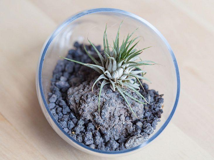 Tillandsien: Tipps zur Pflege von Luftpflanzen