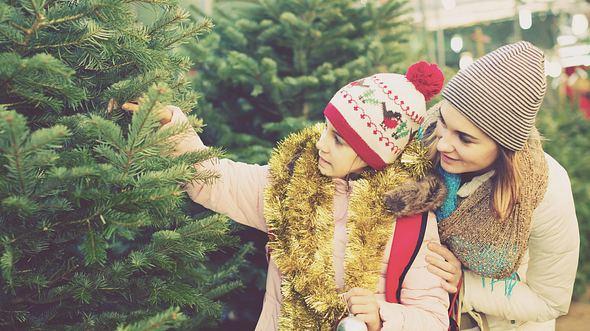 Tipps für den Tannenbaum-Kauf - Foto: JackF / iStock
