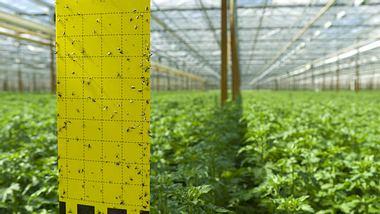Trauermücken: 6 Fragen zum Pflanzenschädling - Foto: hansenn/ iStock