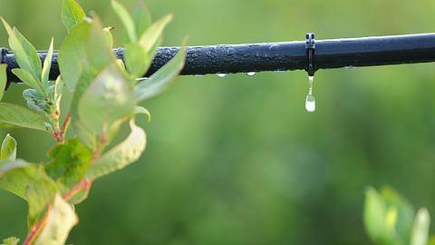Bewässerung mit Tropfschlauch - Foto: iStock/Maxvis