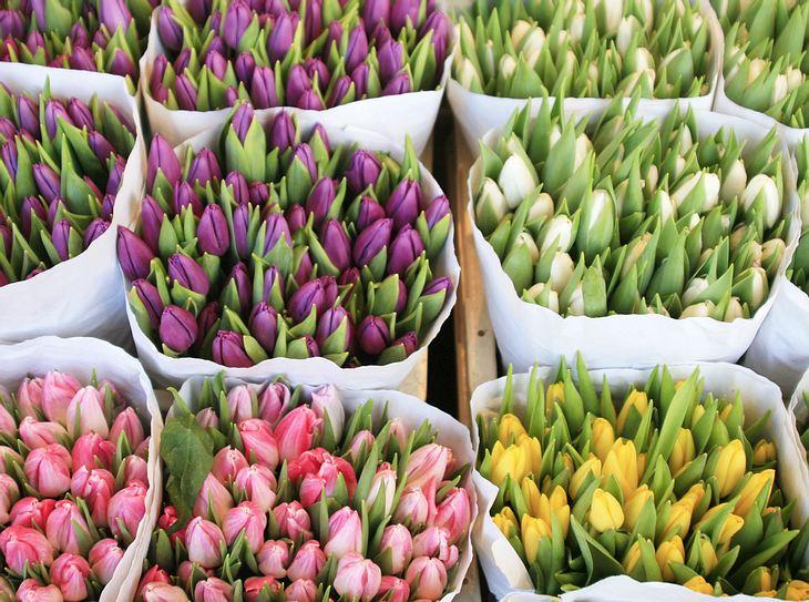 Bunte Tulpen für den Osterstrauß.
