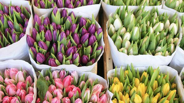 Mit diesen Tricks haben Sie länger etwas von Ihren Tulpen in der Vase. - Foto: KulikovaN / iStock