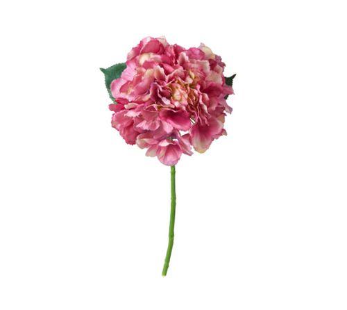 Pinke Hortensie