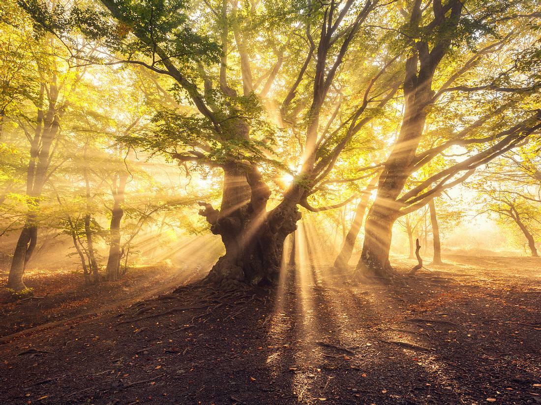 Übersinnliche Kräfte im Wald