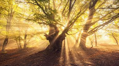 Übersinnliche Kräfte im Wald - Foto: den-belitsky / iStock
