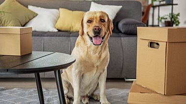Umzug mit Hund - Foto: YakobchukOlena / iStock