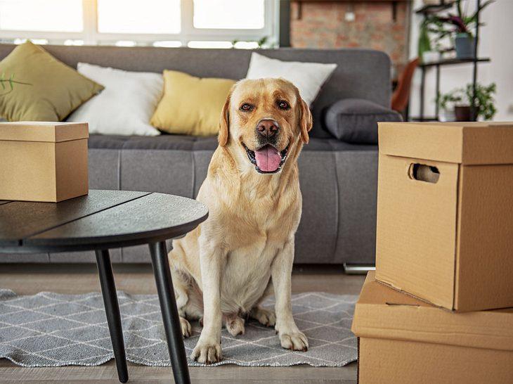 umzug mit hund und katze das sollten sie beachten. Black Bedroom Furniture Sets. Home Design Ideas