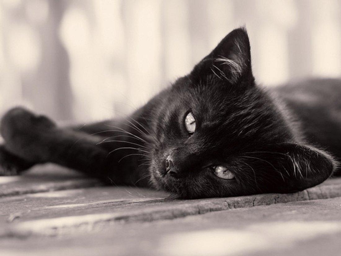 Nach 15 Jahren! Katze kehrt zur Besitzerin zurück