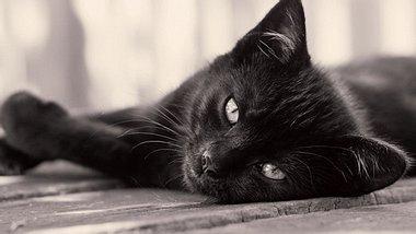 Nach 15 Jahren! Katze kehrt zur Besitzerin zurück - Foto: magdasmith / iStock