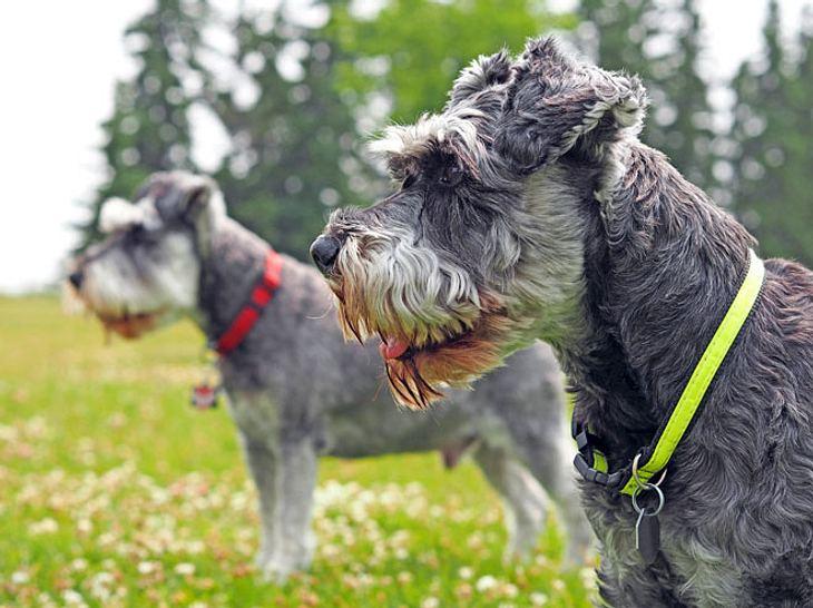 Um ihre vermissten Hunde wiederzubekommen, ließen sich Herrchen und Frauchen einiges einfallen.