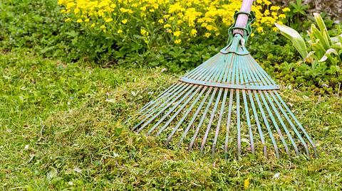 Moos und Unkraut im Rasen entfernen