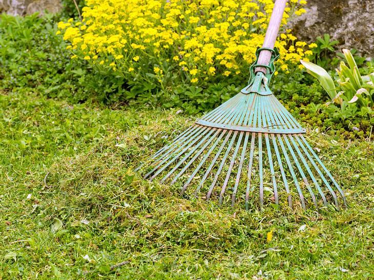 Vertikutieren Oder Nicht Moos Und Unkraut Im Rasen Richtig Entfernen