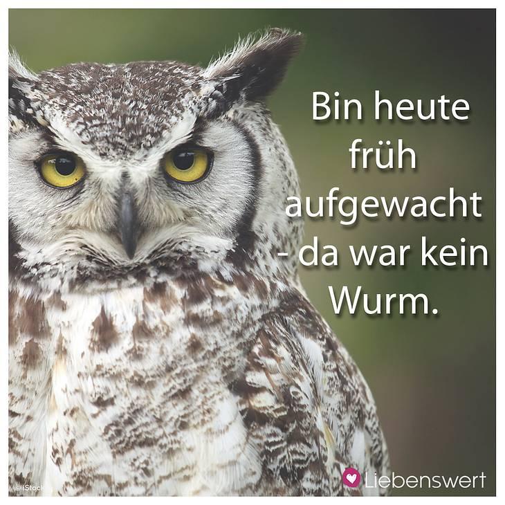 Sprüche Lachen Humor Lustige Sprüche Zum Lachen 2019 08 26