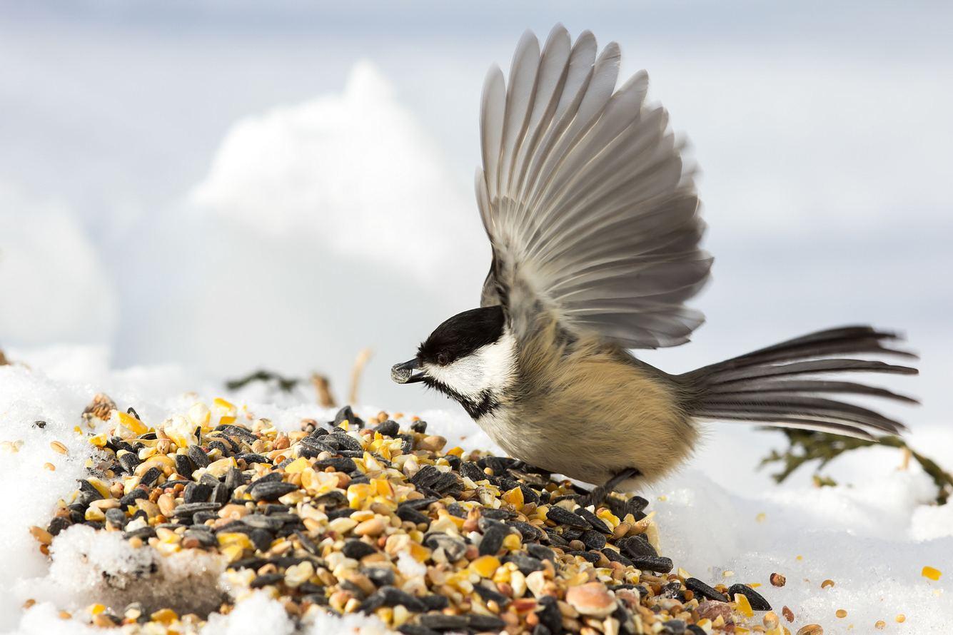 Vogelfutter selber machen: So geht's