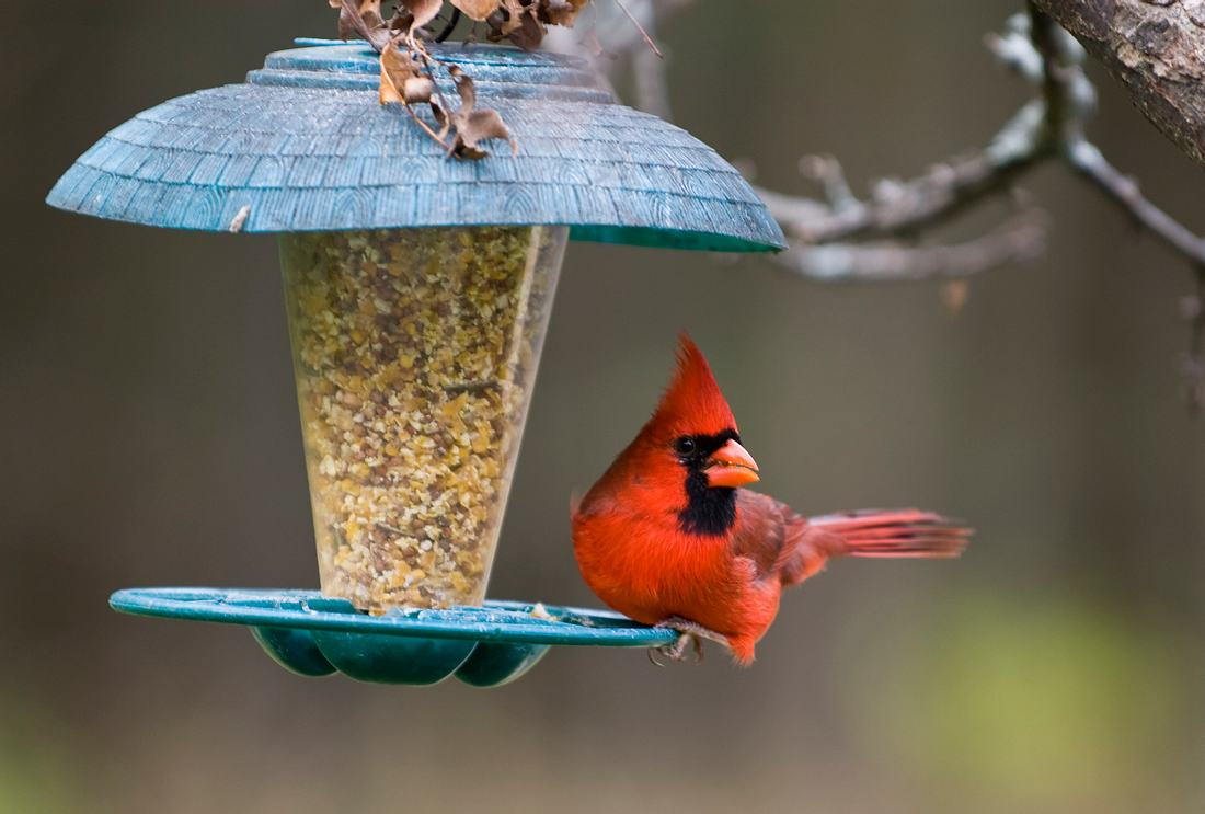 Vogel in Vogelfutterspender