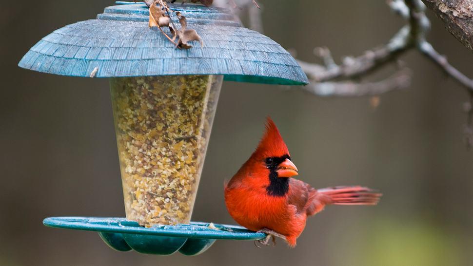 Vogel in Vogelfutterspender - Foto: iStock/doug4537