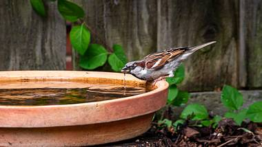 Vogeltränke - Foto: iStock/ Andi Edwards