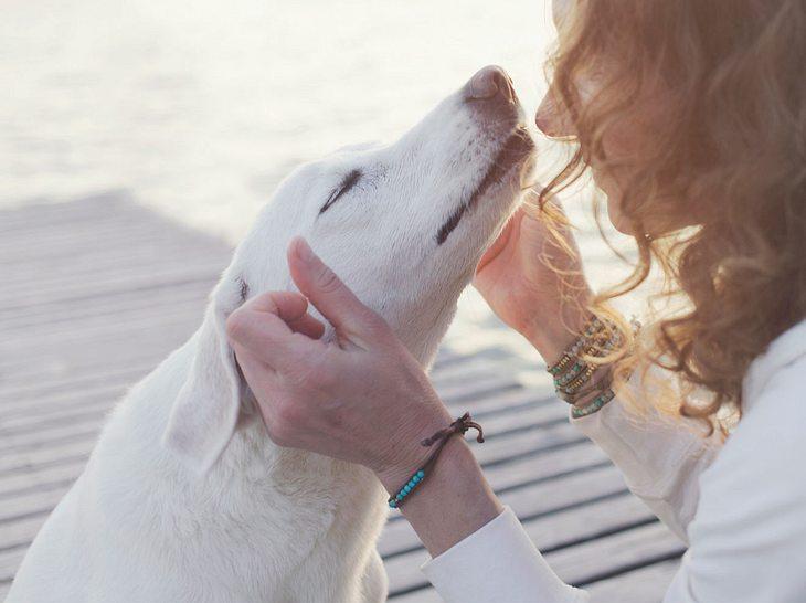 Von Hunden können wir viel lernen