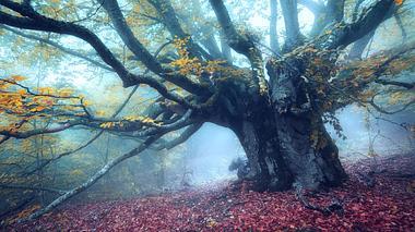 Die wundersamen Kräfte des Waldes