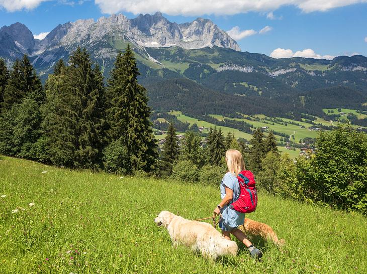 Wandern mit Hund: Das sollten Sie beachten
