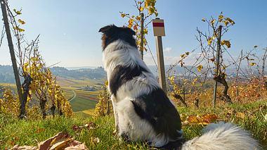 Wanderurlaub mit Hund: Die schönsten Touren - Foto: MaxBaumann / iStock