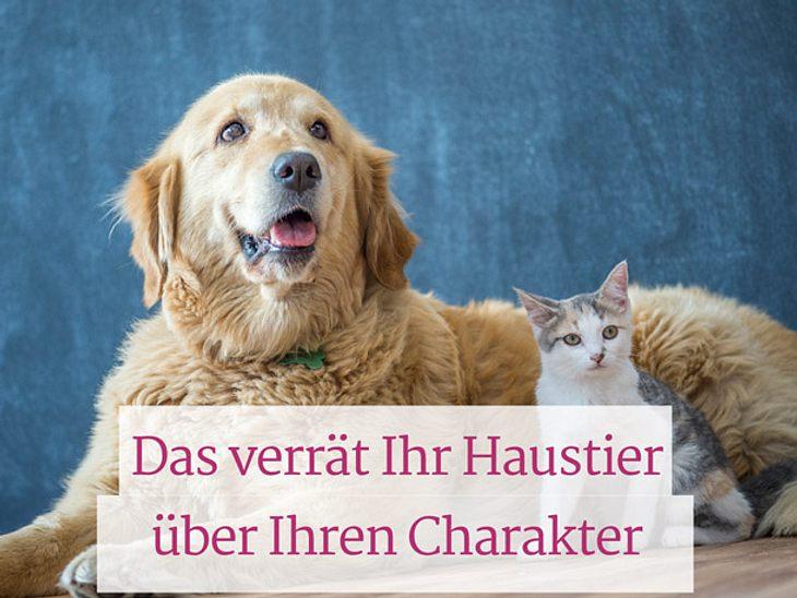 Was Ihr Haustier über Ihren Charakter verrät