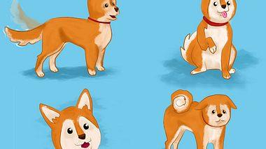 Hundesprache verstehen: Was will mein Hund mir sagen?