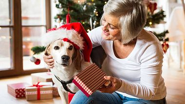 Weihnachts- Geschenke für Hunde