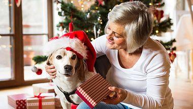 Die besten Weihnachtsgeschenke für Hunde - Foto: Halfpoint / iStock