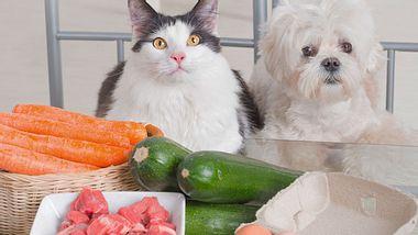 Welche Reste darf Ihr Tier essen?