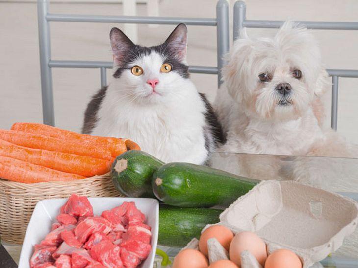 Essensreste an Tiere geben - was ist gesund?