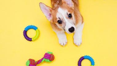 Welpe mit Kauspielzeug - Foto: iStock/Daria Guseva
