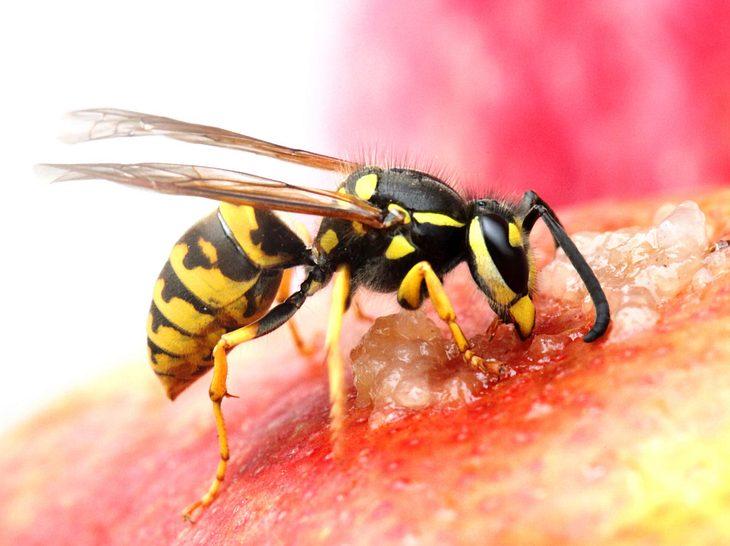 Wie lassen sich Wespen wirklich vertreiben?