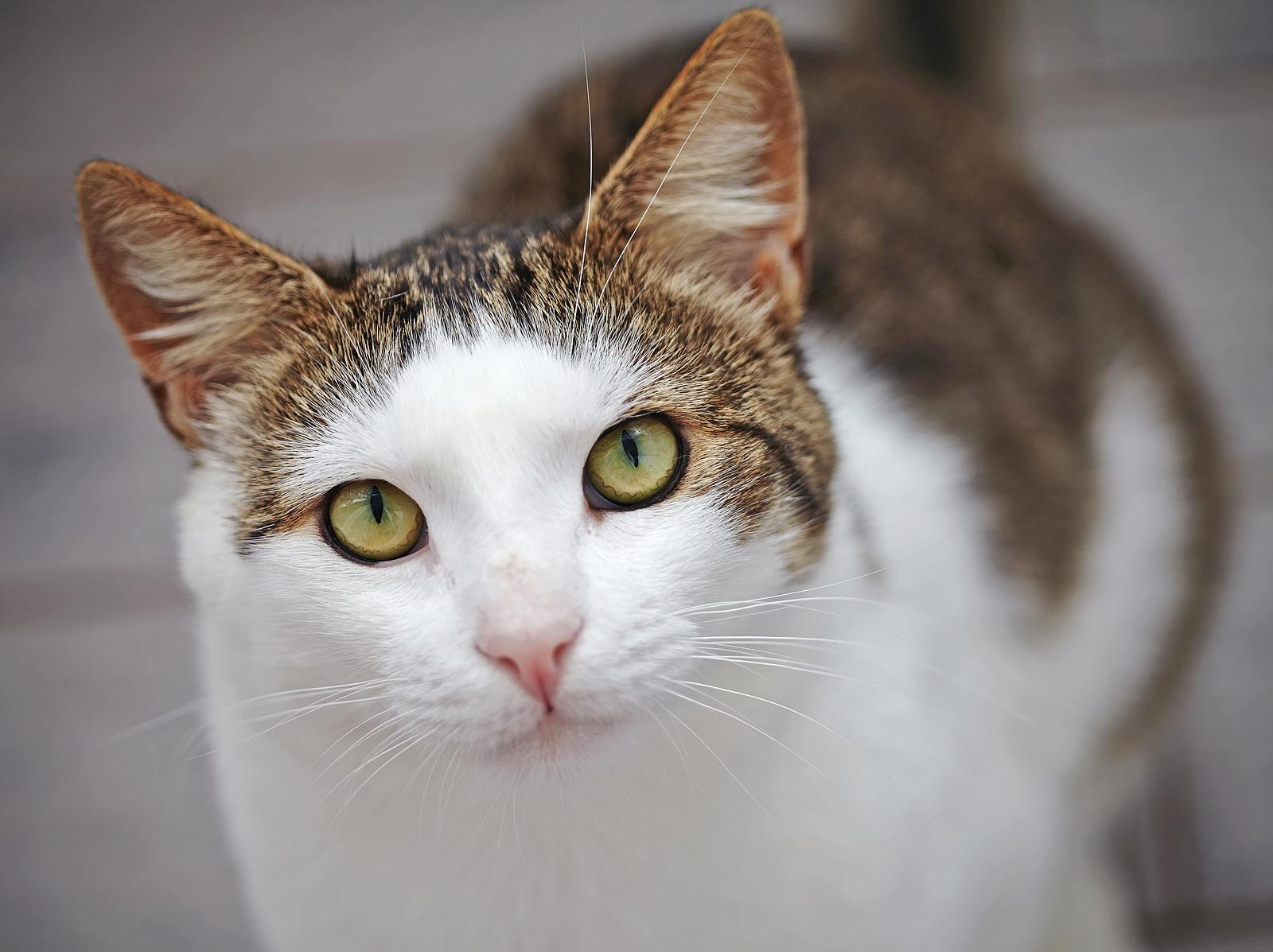 Wie sehen Katzen, warum schnurren sie? 7 Katzen-Fakten