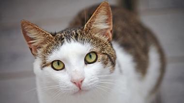 7 Fakten über Katzen: Warum schnurren sie wirklich? Mögen Sie Milch?