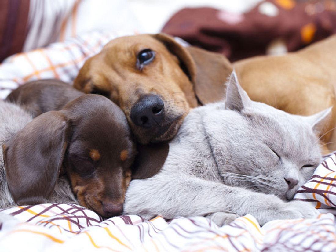 Wie lang schlafen Katzen und Hunde?