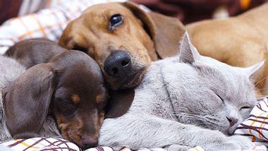 Wie lange schlafen Katzen und Hunde?