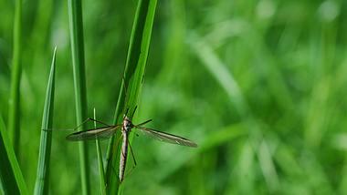 Eine Wiesenschnake sitzt auf einem Grashalm.  - Foto: NNehring / iStock