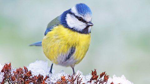 Aktion Stunde der Wintervögel gestartet