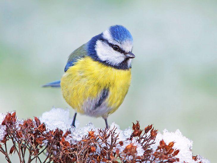 Auch 2018 ruft der NABU zur Zählung der Wintervögel auf.