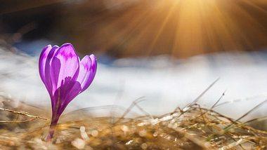 Worauf wir uns im Frühling freuen